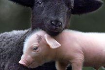 Animals / by Springer Spaniel