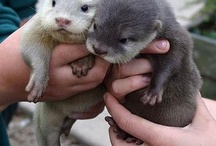 animals-i-love