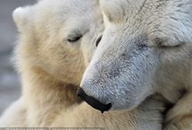 Beauty of Animals