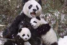 adorable animals / by Heidi Brigham