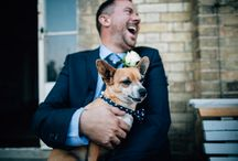 Pets at Weddings {yes please!} / Ideas for your pet at your wedding