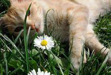 FlowerCats!
