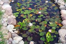 Tranquility Garden and Koi Pond / by Michael Miller