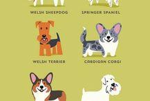 Viktig info om hunder