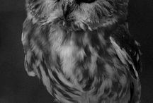 Owls / by Cindy Lovell