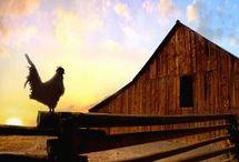 Barns / by Stevie Larson