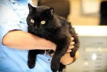 """Бездомные животные: кошки / Бездомные и найденные кошки, находящиеся на попечении Благотворительного Фонда """"Сохрани Жизнь"""". Помогите им найти Дом!"""