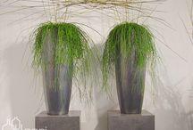 beplanting / Kantoorbeplanting