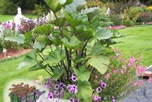 Thrillers / Tall, upright and showy plants for combination container designs.