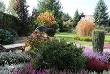 ogród / ogrodowe inspiracje