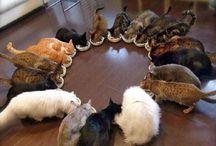 I love cats / Somente gatos