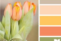Photoshop Color Palates.