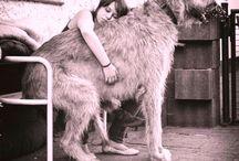 Αγάπη για τα ζώα