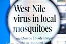natural mesquito repellent