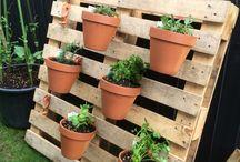 Herb Garden / Garden
