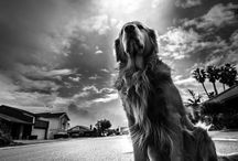Black & White Pet Photography / The essence...the spirit. A single moment of time caught with creative might - all in black and white.