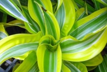 Tropical Houseplants