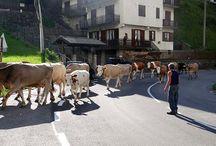 Herders in de Orobische Alpen Noord Italië / Ontmoet deze authentieke bewoners (#Connect-with-locals) in de Valle Brembana - accommodaties van ItaliAdesso. https://www.italiadesso.nl/vakantiealpenitalie/herders-noord-italie/