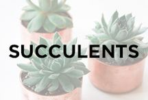 Succulents / Succulents, cactus, prickly pears, green plants, indoor plants, mini plants, cute plants, cacti, garden, plants.