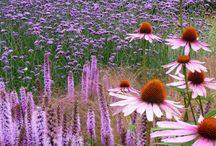 Garten / Blumen, Gartentipps, Gartengestaltung