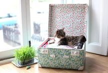 Cat DIY/Craft / For all you crafty types out there: DIY cat stuff to knock up for your favourite felines.  (And a couple of things to make for yourself.)