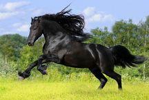 Magnificos caballos. / by Maria Jesus Peña Espadas