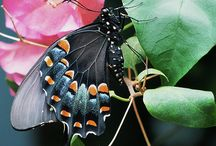 Butterflies and Moths / by Susanne Neider