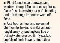 pest control in flowers or vegetables