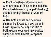 eko sadenie
