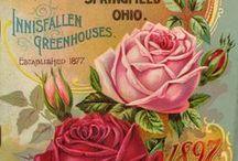Roses Paper.