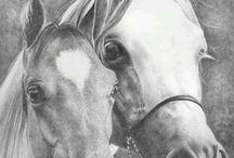 Horses - Portraits (Graphite)