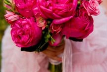 Fuschia Weddings / Fuschia Weddings / by On the Go Bride