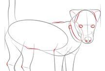 Animal Drawing