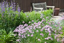 Landscape Herbs / Herbs for your landscape garden