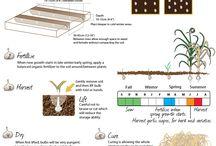 Food Growing & Gardening