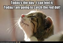 Kitties!! / by Lena P