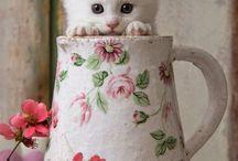 gatito taza