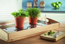Solario para Hierbas / Cultive brotes de plantas esta temporada o mantenga las hierbas frescas en su cocina todo el año con este solario reflectante y conservador de agua para encima de la mesa.