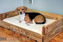doggie beds