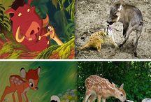Disney for ABC