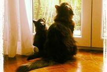 Febo&Calliope