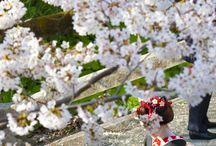 Spring on japan