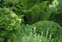 Ferns / Ferns are some of the oldest plants on Earth, making caring for them different than other plants. Learn how here.