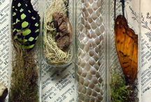 CRAFTS: terrariums and natural collections