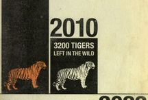 Tigers Conservation