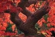 Trær / Magiske trær