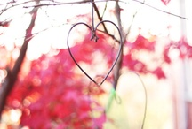 ~pretty in pink~ / by Kimi Boustany