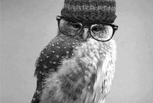 Weird Owls