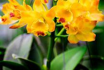 Flowers , Plants, Trees, Fences, / Flowers , Plants, Trees, Fences,