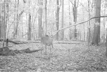 Trail Camera Pictures / Some of my favorite trail camera pictures
